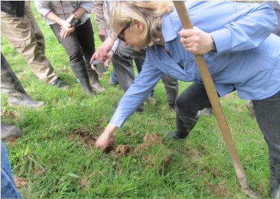 Beverley Exposed The First Few Centimetres Of Soil To Look For GGE Burrows And Show The Lovely Clay Soils Preferred By These Giants